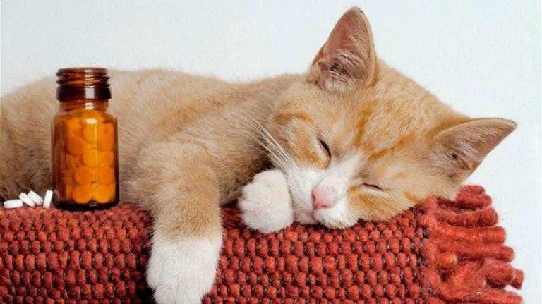 Профилактика геморроя у кошек